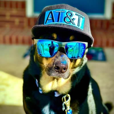AT&T Stylish Puppy